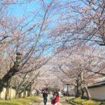 桜名所な西国三十三所のお寺
