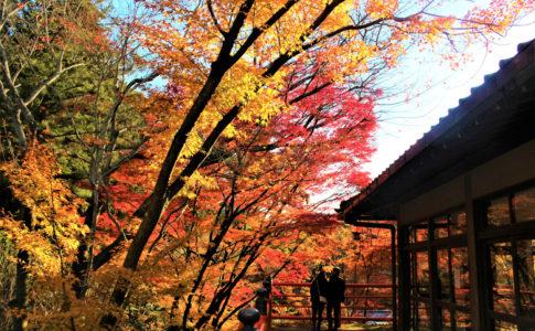 今熊野観音寺の見どころ現地レポ(西国三十三所20番)