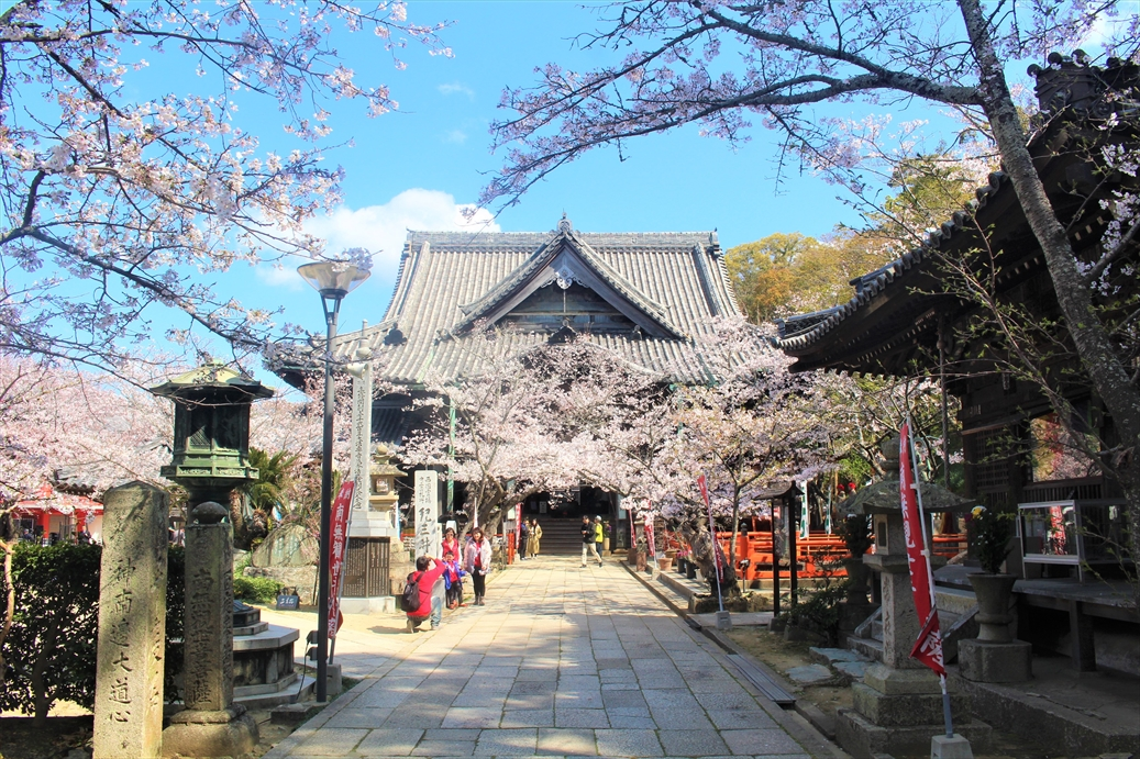 紀三井寺の桜