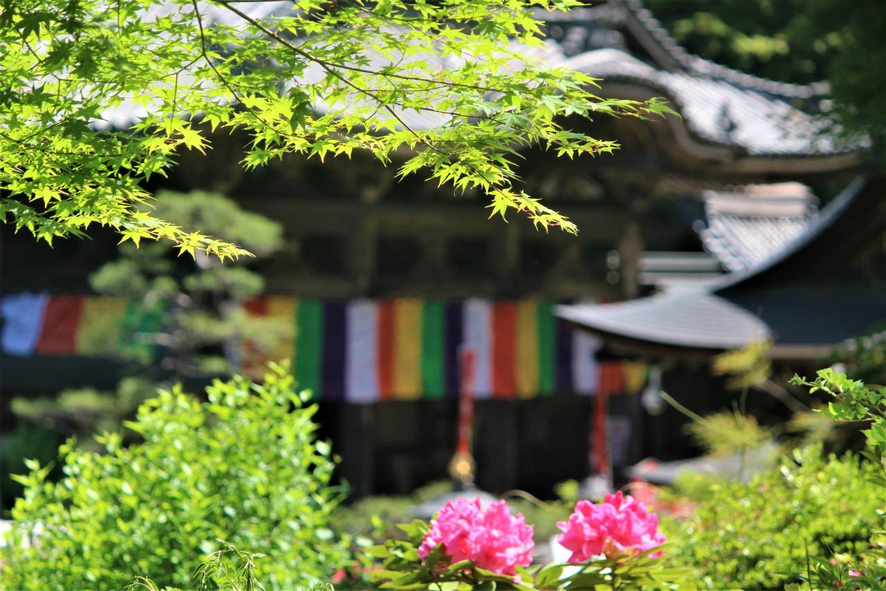 岡寺(奈良県)西国三十三所7番の現地レポ